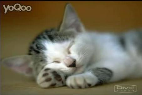 可爱的猫咪
